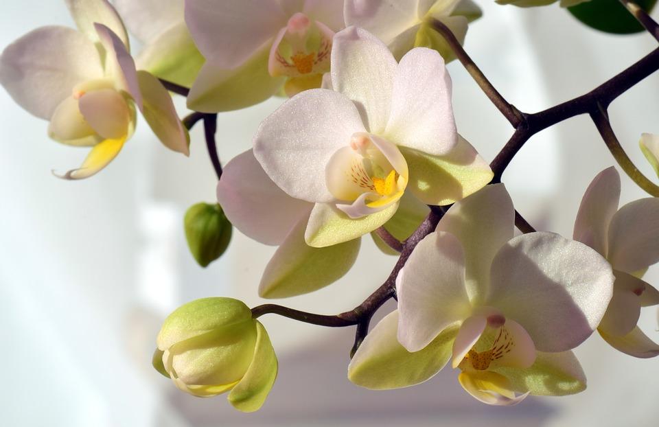 Tips Merawat Bunga Anggrek Agar Cepat Berbunga